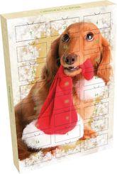 koirakalenteri